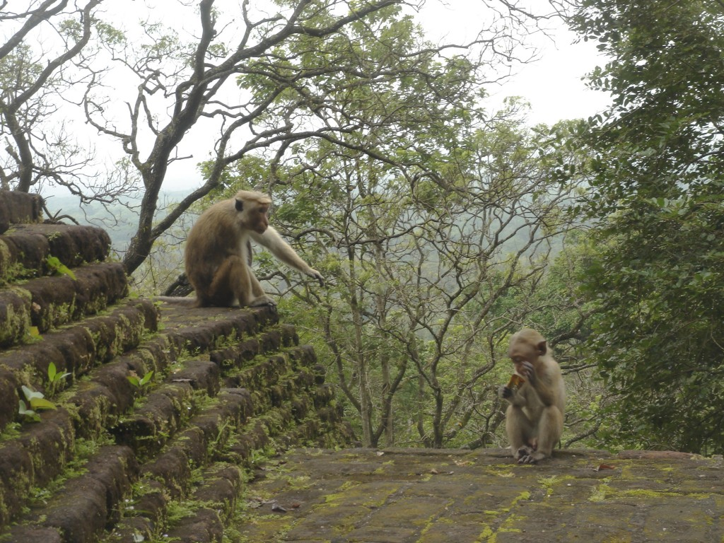 Monkeys on Ruins in Sri Lanka